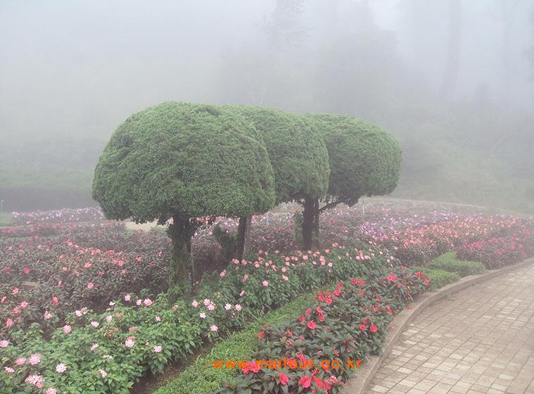 도이 인타논 국립공원 4