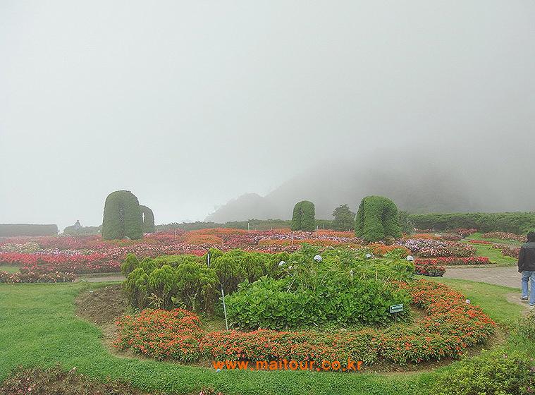 도이 인타논 국립공원 3