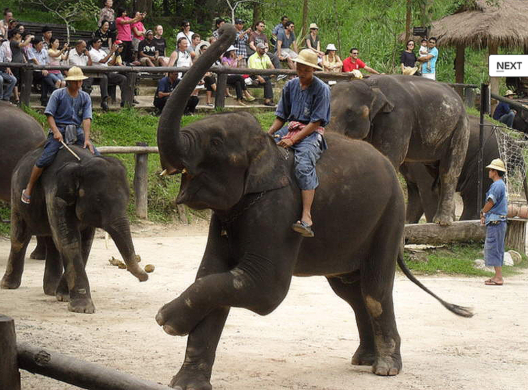 코끼리사파리 카렌족 13