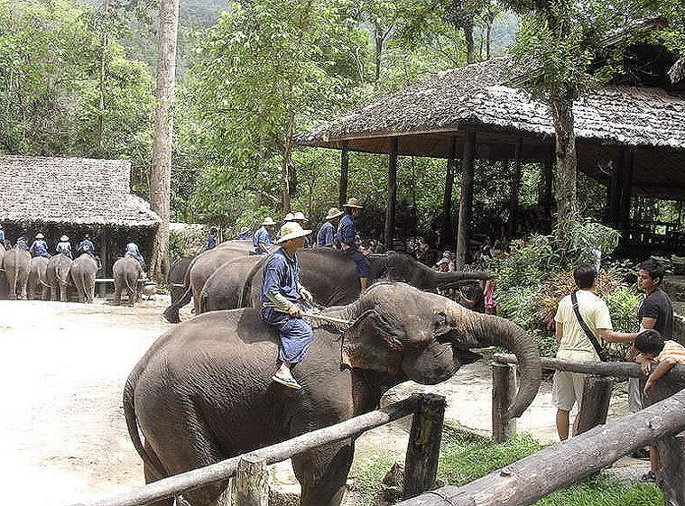 코끼리사파리 카렌족 1