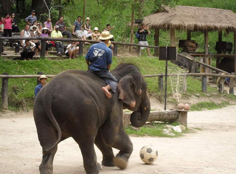 코끼리사파리 카렌족 9