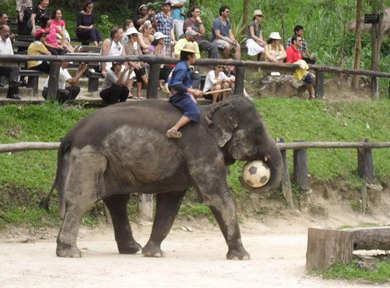 코끼리사파리 카렌족 10