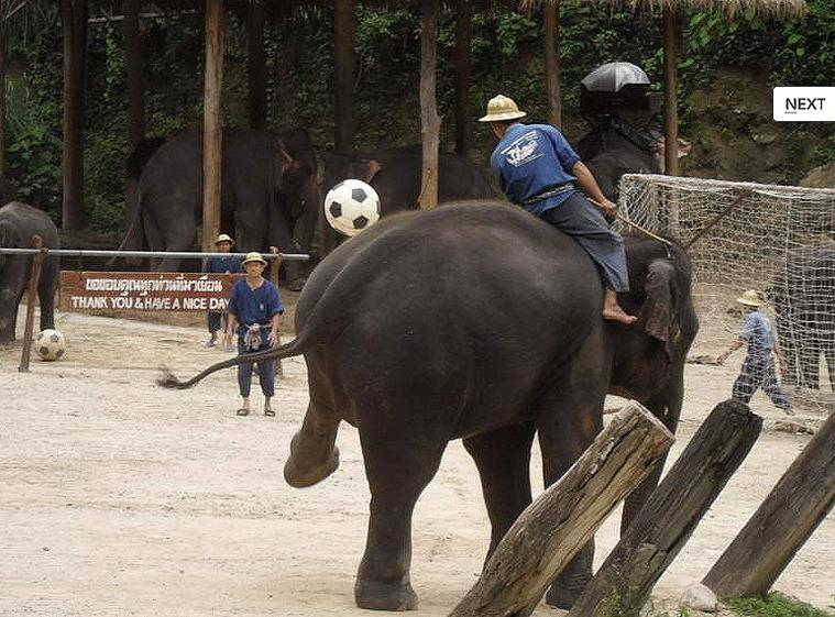 코끼리사파리 카렌족 11