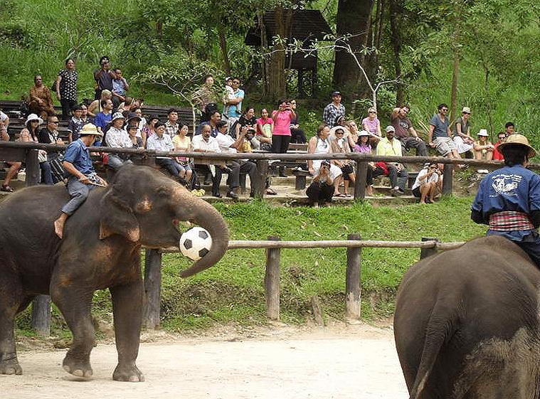 코끼리사파리 카렌족 8