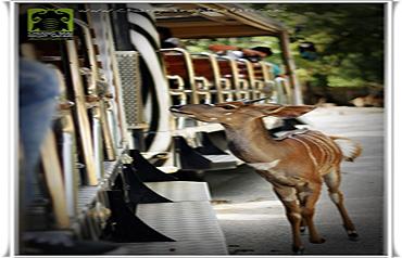 치앙마이 나이트 사파리 동물들3