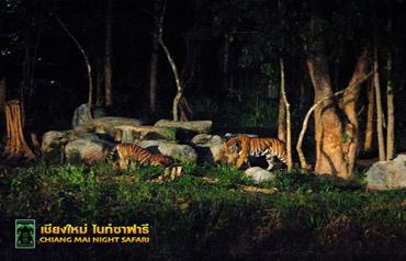 치앙마이 나이트 사파리 동물들15