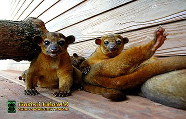 치앙마이 나이트 사파리 동물들11