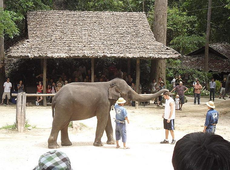 코끼리사파리 카렌족 4