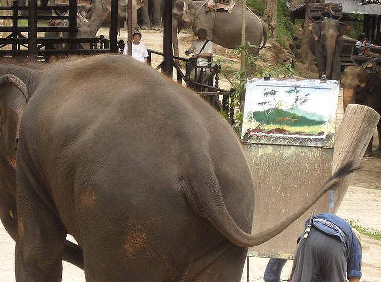 코끼리사파리 카렌족 5