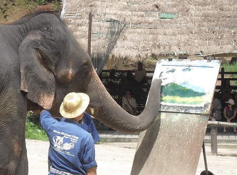코끼리사파리 카렌족 6