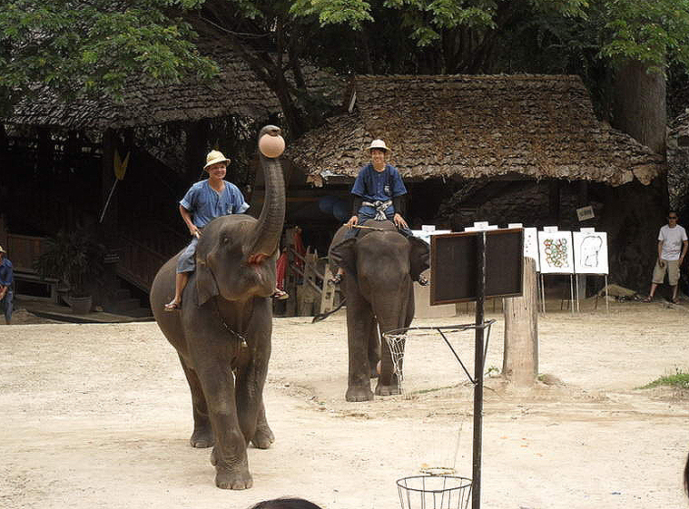 코끼리사파리 카렌족 3